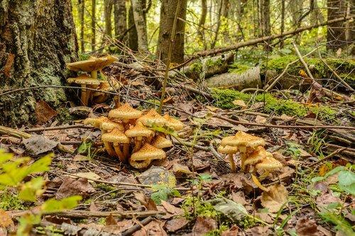 Смешанный лес в Боровском районе Калужской области. Дата съемки - 25 сентября 2016 года Автор фото: Вячеслав Степанов