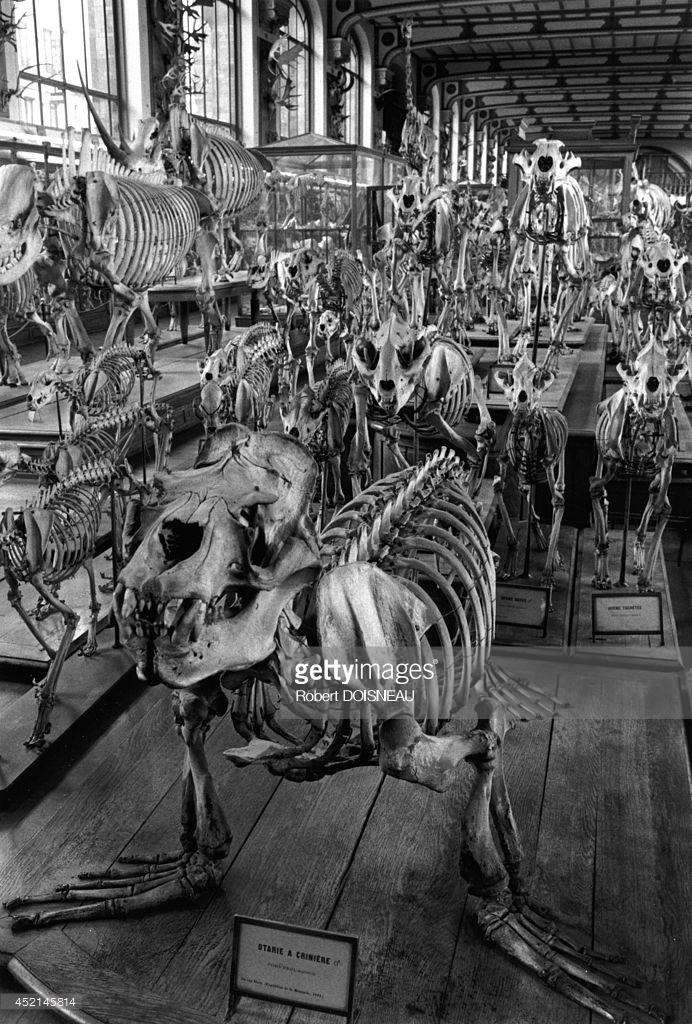 1990. «Большая галерея эволюции» в Музее естественной истории