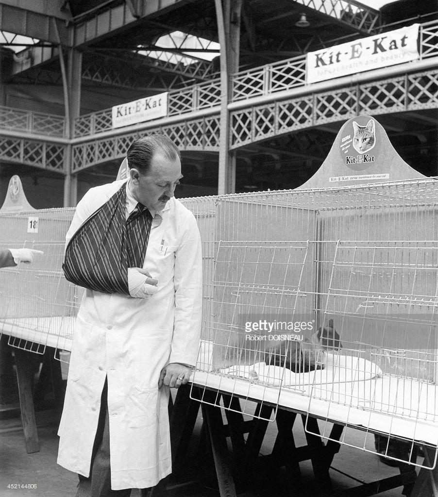 1950. Сиамская кошка в клетке в Лондоне