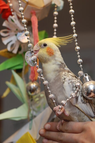 Попугаи. 0_6fa18_fa6ae6fa_L