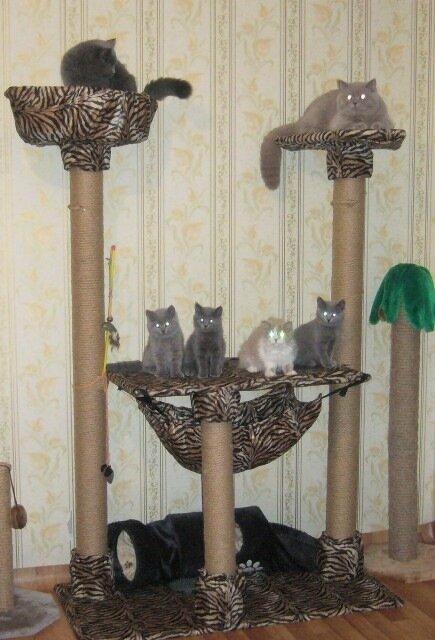 Кошки и котята Сибири - Показать сообщение отдельно - Домик для кошки своими руками.