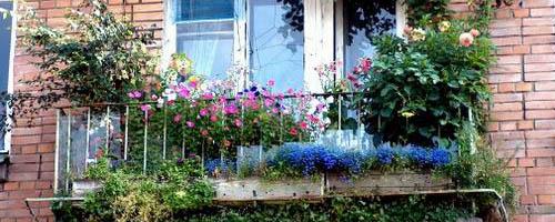 orangereia-na-balkone-12.jpg