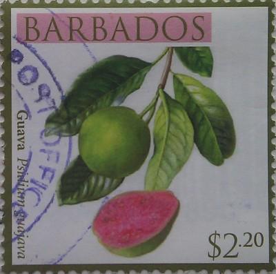 барбадос гуава 2,20
