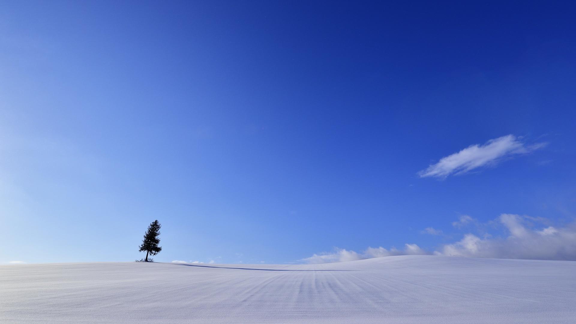 дерево в снегу одинокое