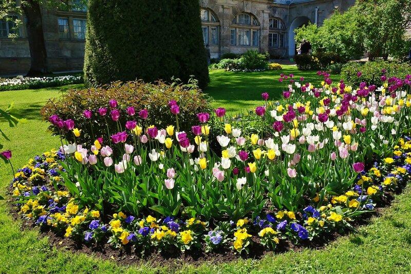Цветы Фрейлинского садика