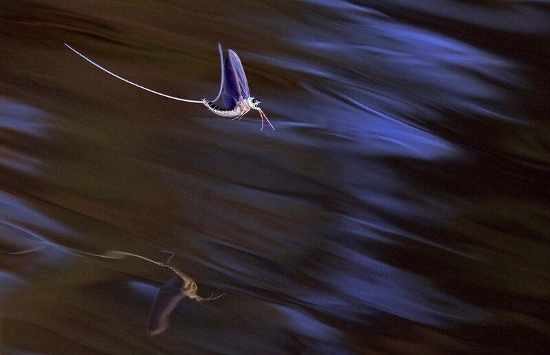 Топ 50 лучших фотографий из мира природы, сделанные настоящими мастерами