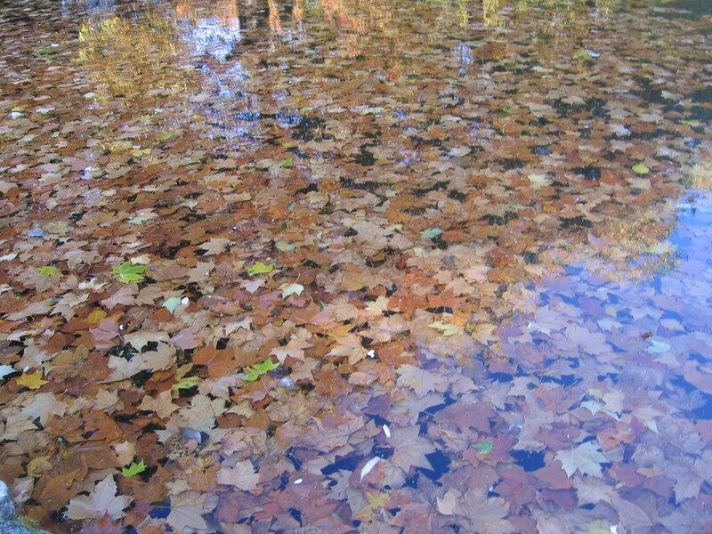 Осенняя вода.