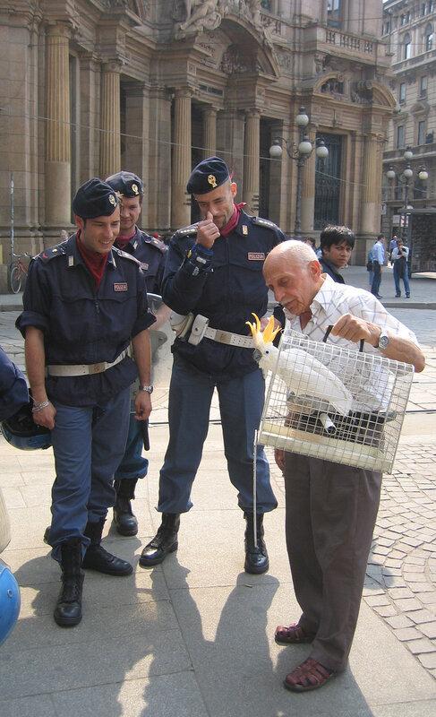 Полицейские и попугай