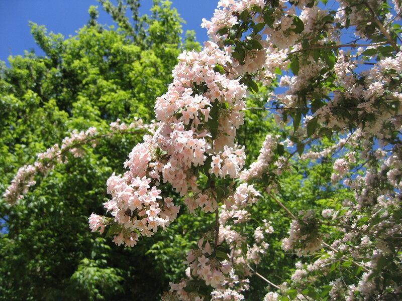 Весна в Мадриде