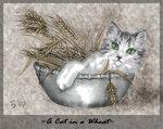 Кошка в злаках