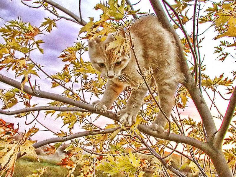 Кот по имени Осень