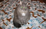 Котей-богатей