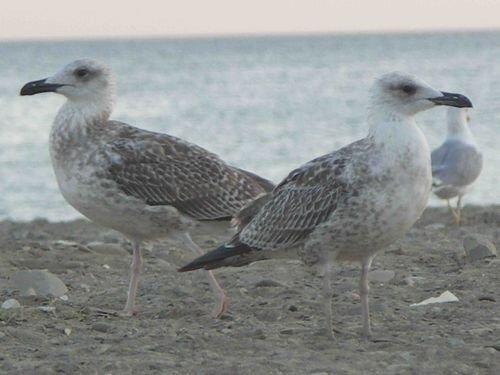 две чайки стоят - друг на друга не глядят...