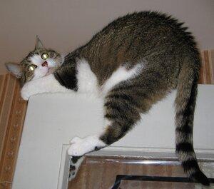 кот верхом на двери