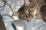 кошки, мышки...