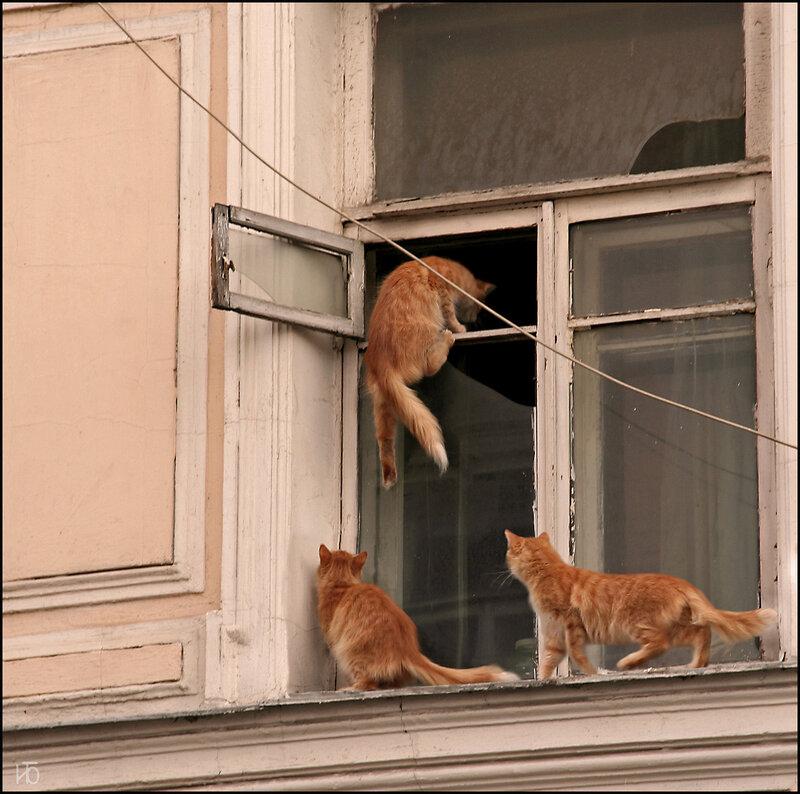 Сонник упавший балкон. - галерея работ утепление - каталог с.