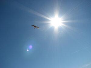 Птица, 2007