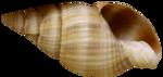 морские феи 2