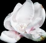 NatashaNaStDesigns_WiterFairytale_flower4.png