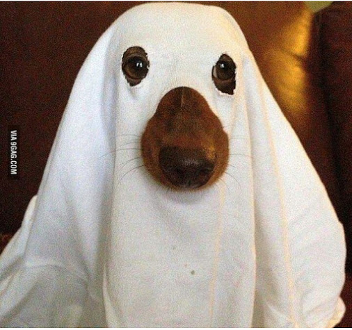 I'm Ready for Halloween
