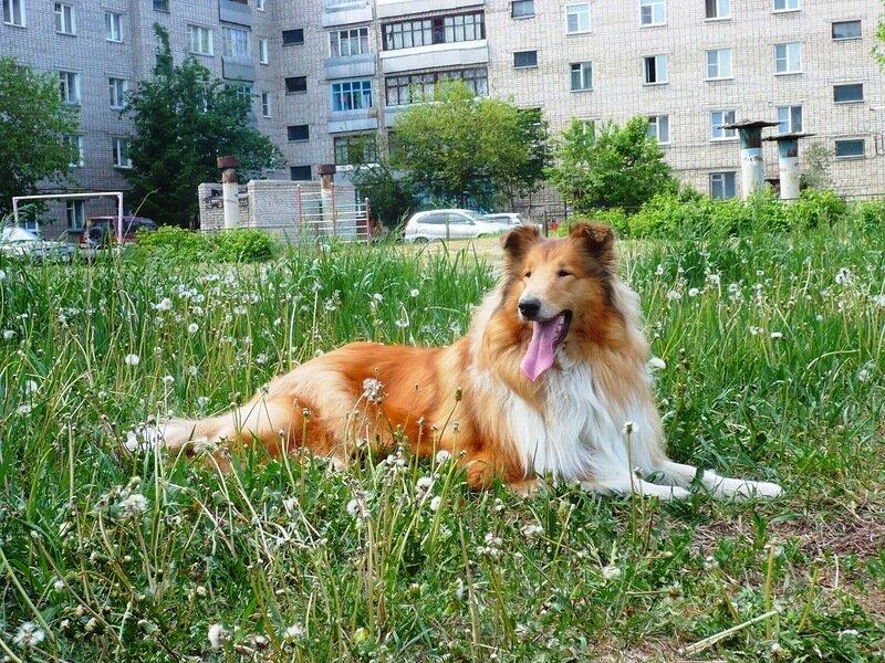 http://img-fotki.yandex.ru/get/40/134559744.4/0_765c9_d6331a61_XL.jpg