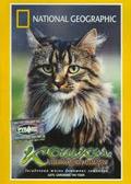 Документальные фильмы Кошки: Ласковые тигры