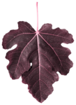 leaves3-(lthdsgn).png
