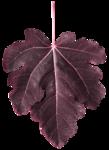 leaves3-(lthdsgn).png