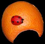 «Fruits_Village_by»  0_8a610_52c9ea05_S