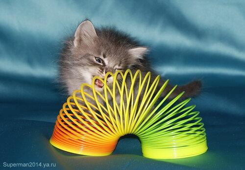 Котёнок и пружинка