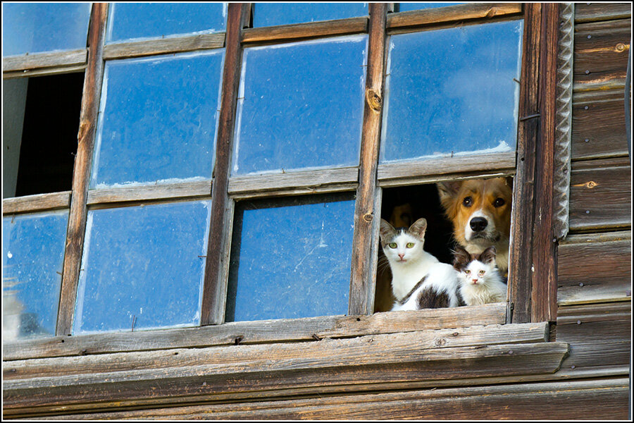 Собачка и котики
