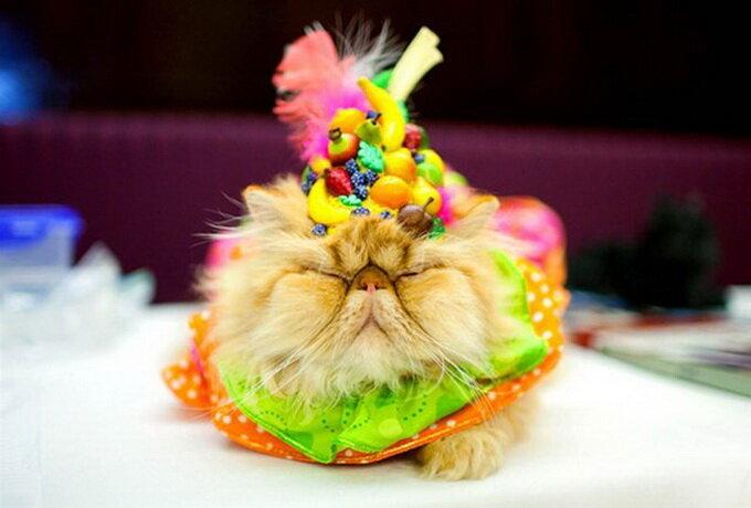Кошачья мода.