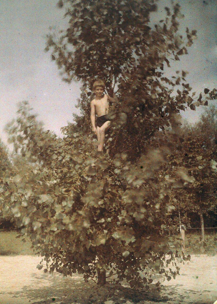 1920. Мальчик на дереве