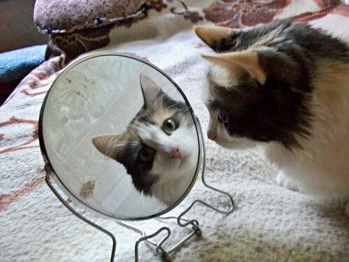Победители конкурса «Свет мой, зеркальце»
