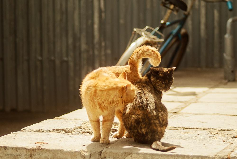 Не столичные коты :)