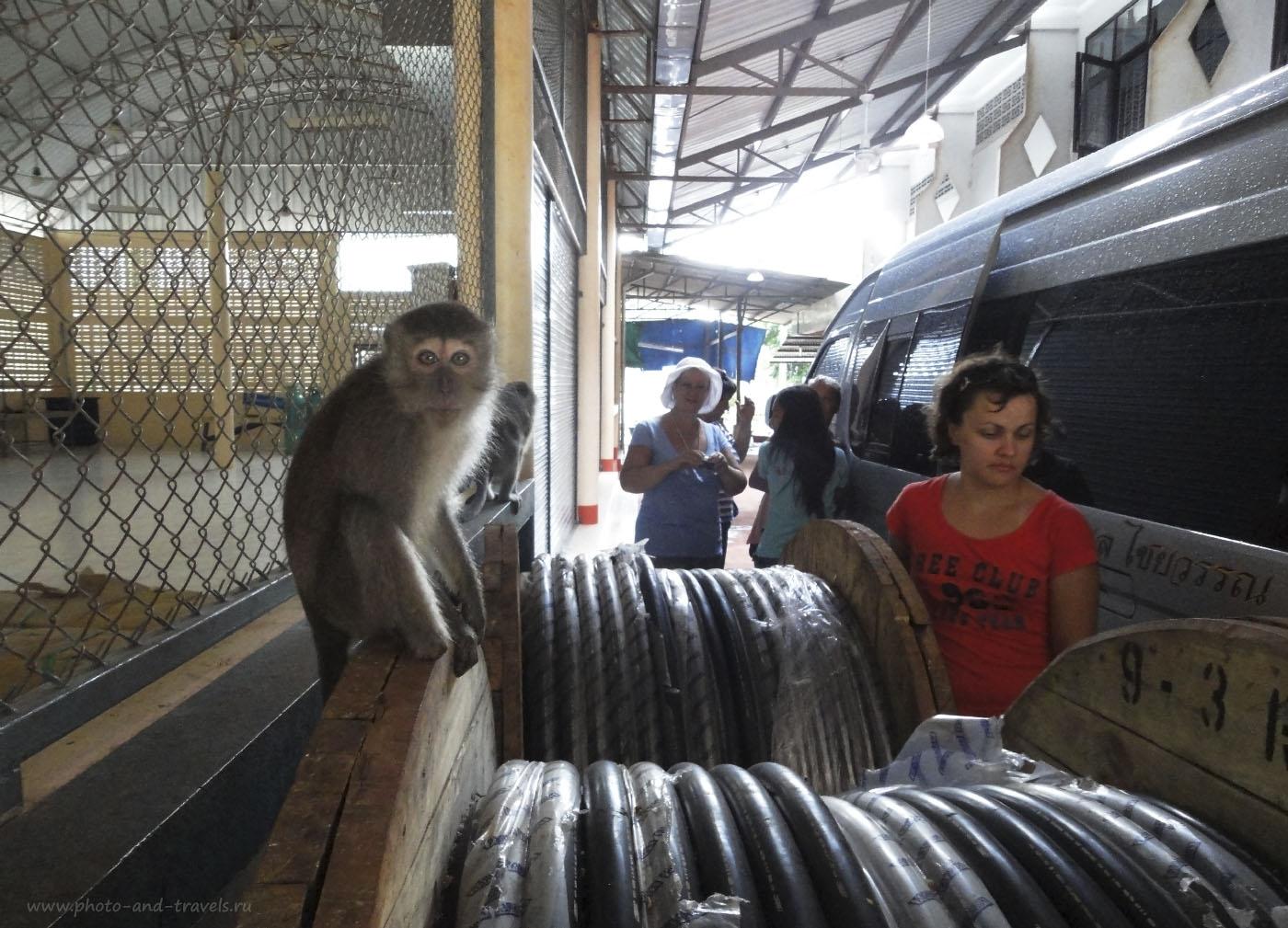 Фотография 6. Во время первого самостоятельного путешествия в Краби в 2010 году мы ездили на экскурсии, покупая путевки в уличных туристических агентствах. Этот снимок получен на стоянке у Храма Тигриной Пещеры (Wat Tham Sua или Tiger Cave). Весной 2015 года мы ездили по Тайланду за рулем арендованной машины, и приехали сюда снова. Только не пришлось больше спешить. В отчете за 2015 год читайте советы по безопасному общению с обезьянами.