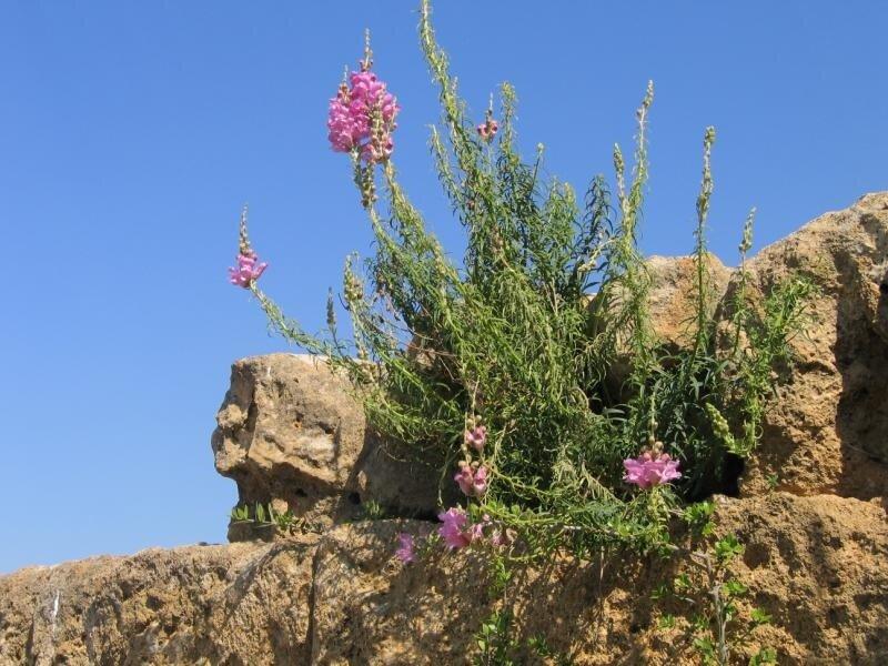 На руинах Агридженто