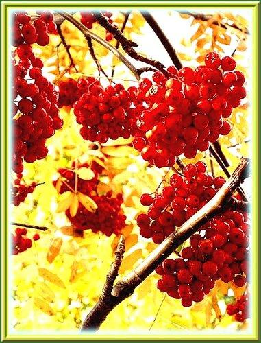 Песня ягода рябины скачать
