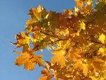 Осень-53.jpg