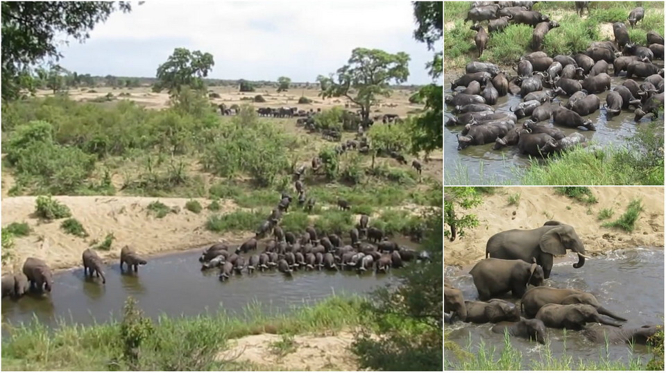 An impressive sight: a mass hike on a watering place for African animals