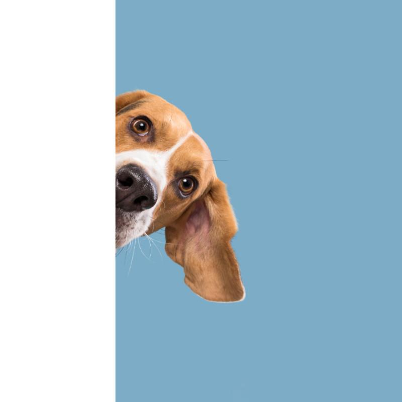 Германия собаки уникальность