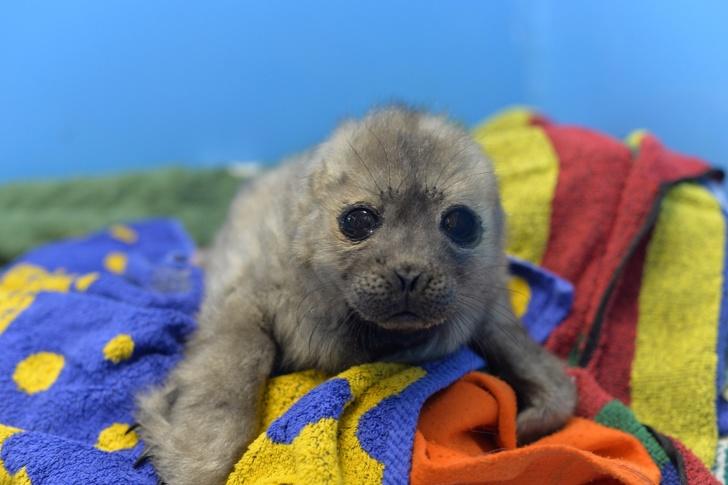 История тюлененка Крошика, который, видимо, считает себя котом (7 фото)