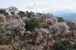 Сады Альпухарры