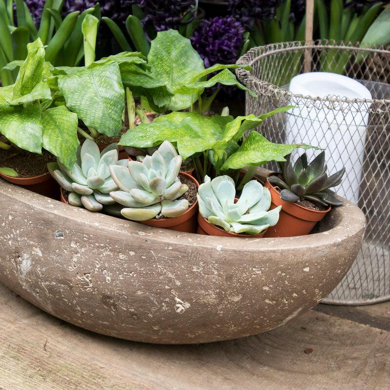 succulents in a large ceramic pot