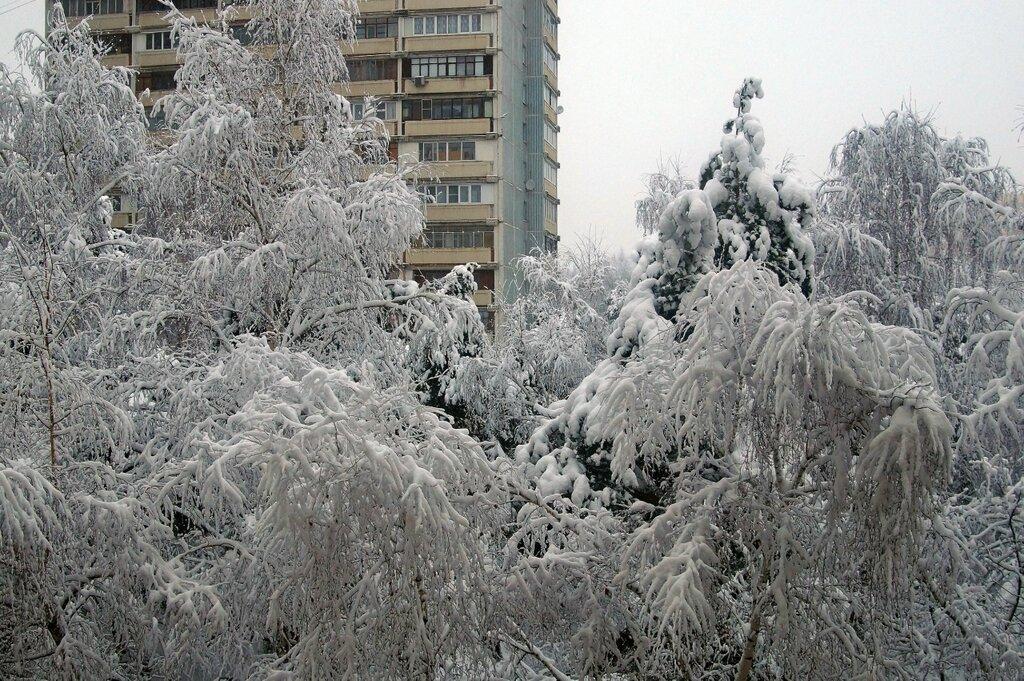 последний день января в подмосковье