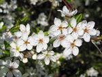 Праздник цветения...