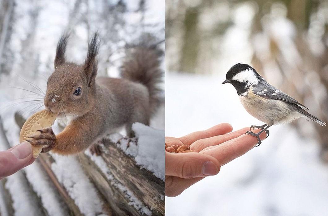Животных кормить разрешается