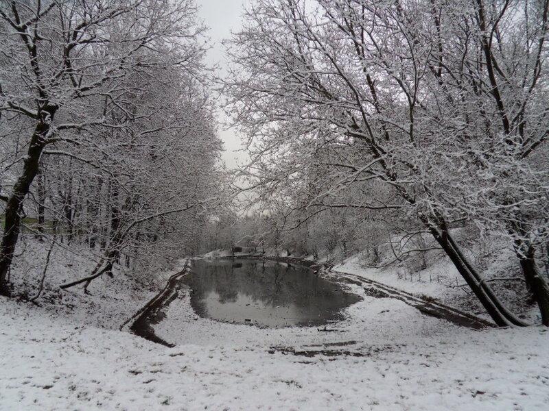 Пруд в снежных кружевах...