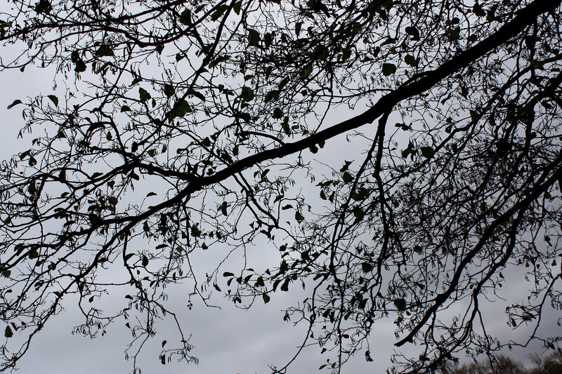 Ветка, небо и осень
