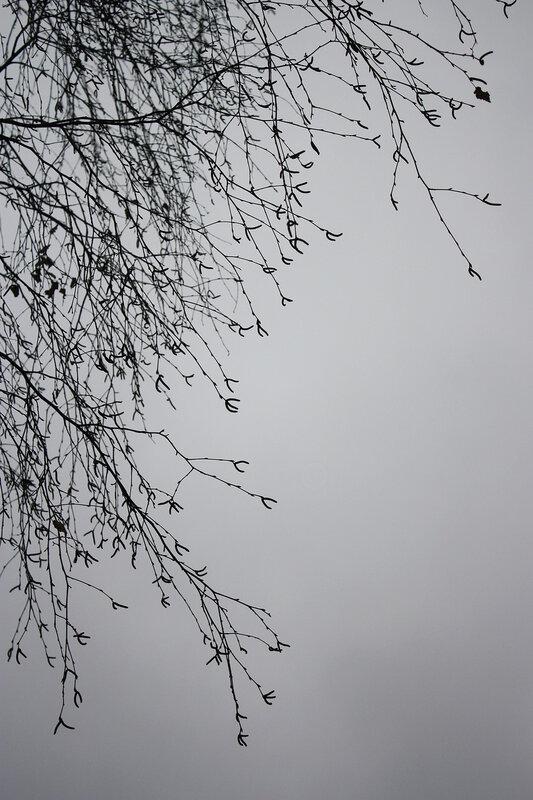 Березовые ветви и небо